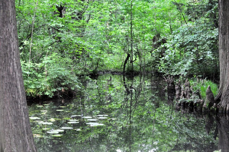 Swamp in forest