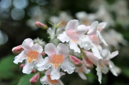 Exotic tree flowers